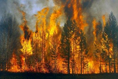 Депутат предложила бомбить горящие в Сибири леса.